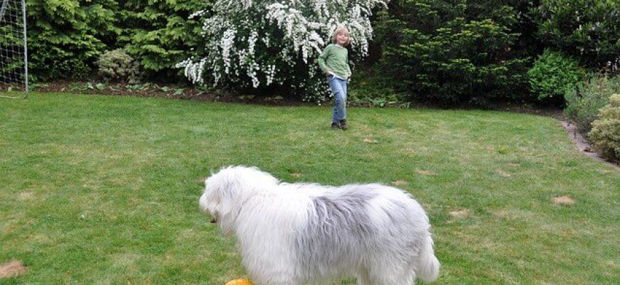 הפעלות עם כלבים