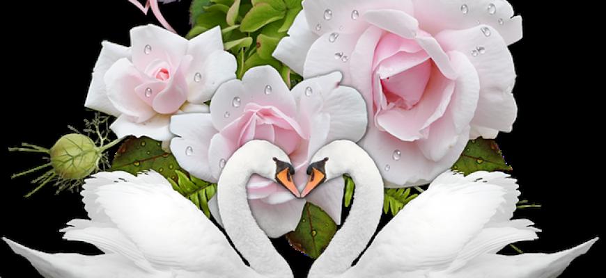 חתונה טבעונית במרכז – טעים, מוסרי, חגיגי